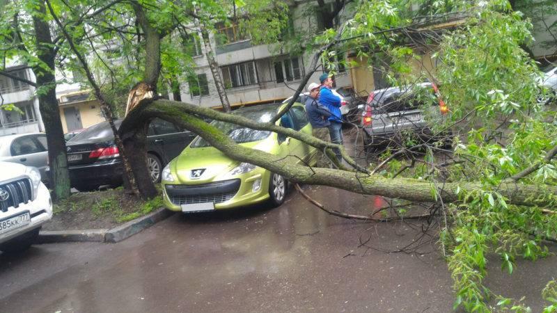 Если на автомобиль упало дерево или любой другой предмет, когда вы ехали на машине, то необходимо звонить в ГИБДД.