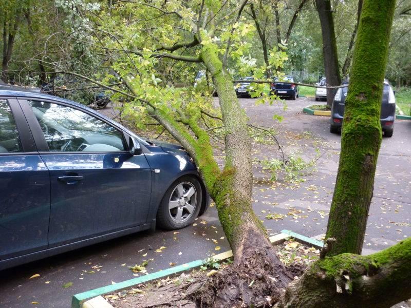 Многие люди, увидев на своей машине упавшее дерево, не знают, что им делать и куда бежать.