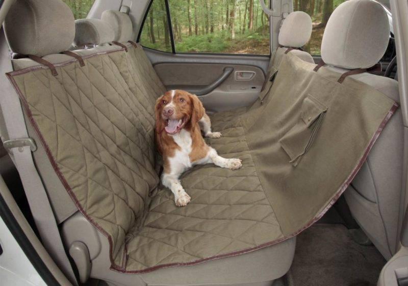 К длительной поездке с собакой следует готовиться заранее.